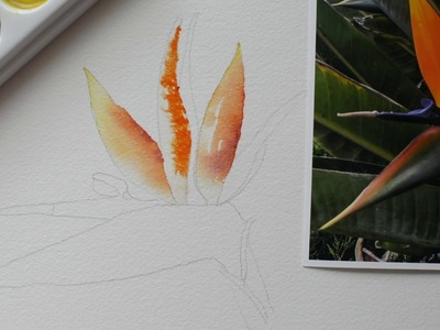 Bird of Paradise Part 4 Step by Step Watercolor Painting Instruction and Tutorial - Paint With Me!
