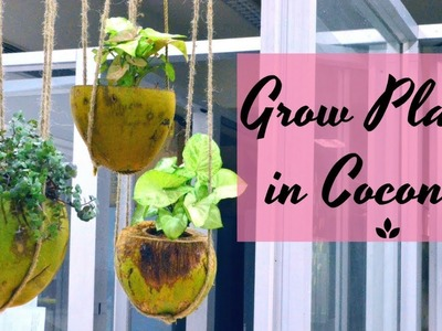 Grow Plants in Coconuts | Eco-friendly DIY Project. Garden Up