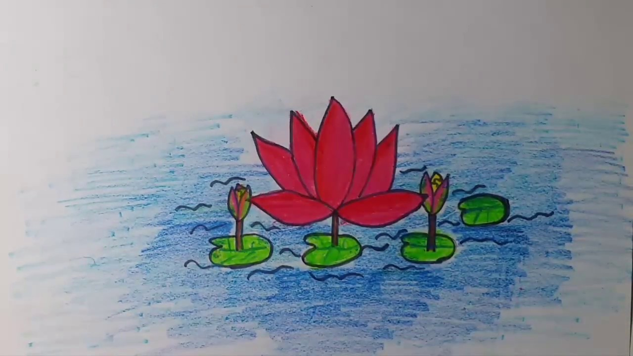 How to draw our national flower water lily shapla my crafts and how to draw our national flower water lily shapla izmirmasajfo