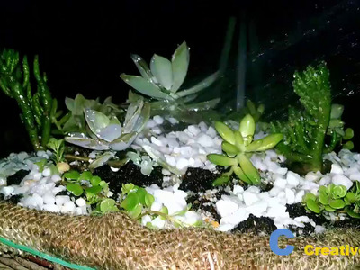 How to Make a Dish Garden With Succulents Plant