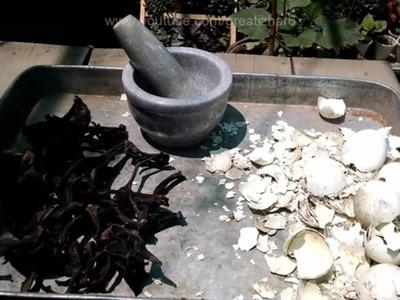 How to Make Egg Shell Fertilizer | Organic Fertilizer | Ghar Par Khaad Kese Banain