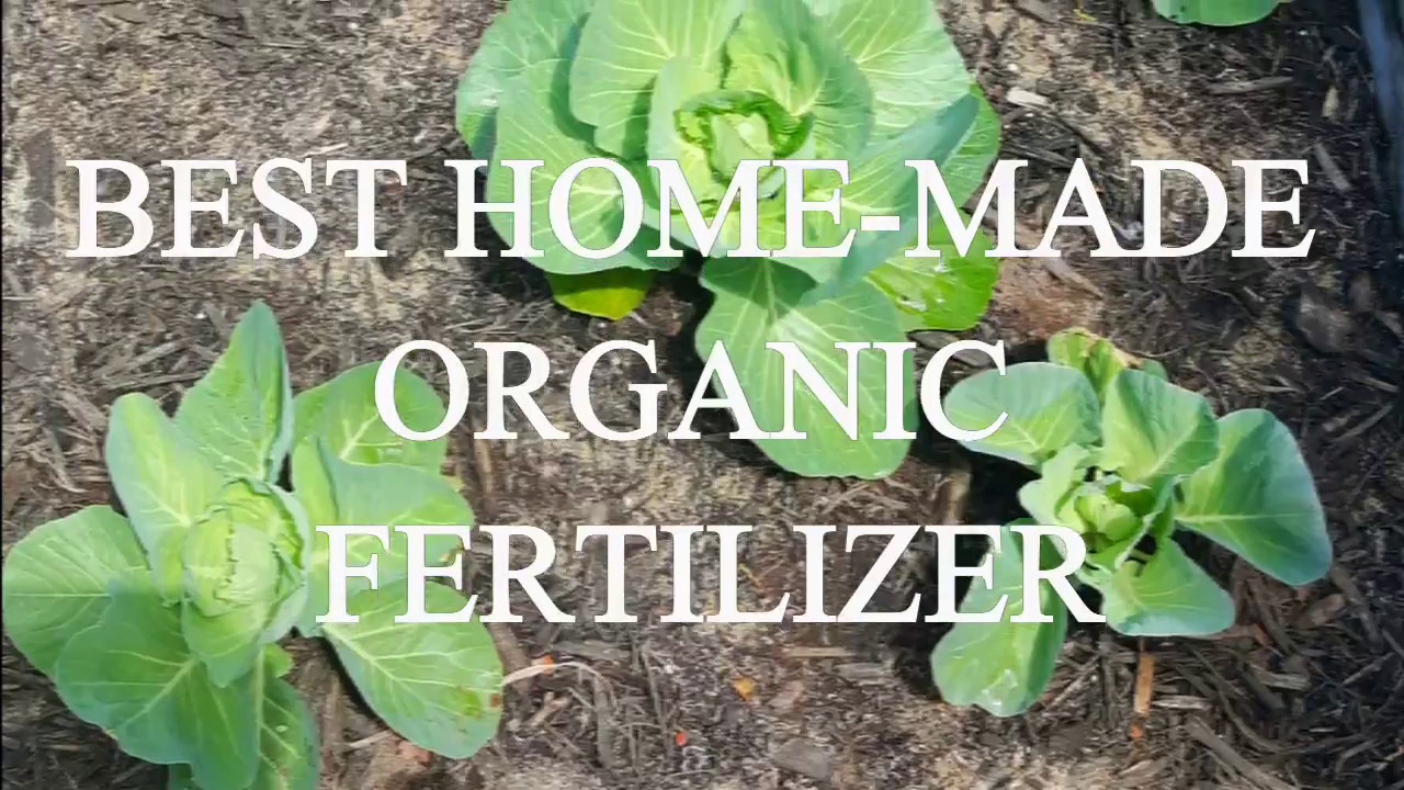 HOW TO MAKE THE BEST HOMEMADE ORGANIC FERTILIZER