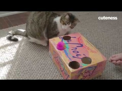 How To Make A DIY Soda Box Cat Toy