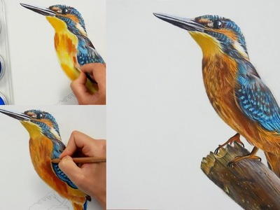 Drawing, Coloring a Bird (kingfisher) with PanPastel and Colored pencils