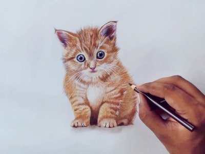 Drawing Animals 1 - Drawing a kitty - prismacolor pencils