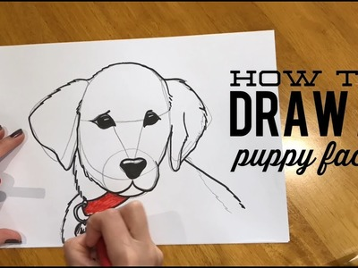 Beginners' Lesson - How to Draw a Puppy Face