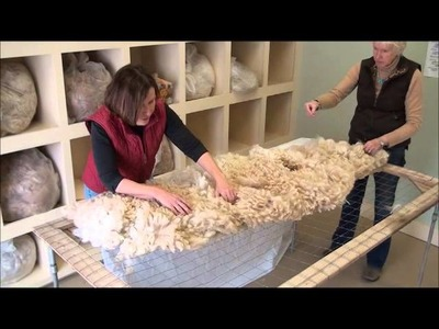 How to Skirt an Alpaca Fleece