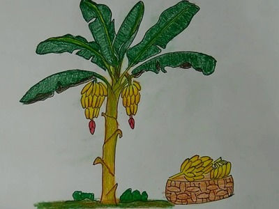 How To Draw An Banana Tree, How to draw a cartoon banana tree, How to Draw a Cartoon Tree