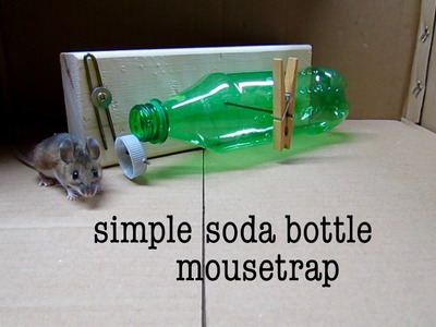 How to make ● a simple SODA BOTTLE HUMANE MOUSETRAP (that works!)