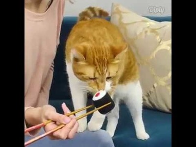 Crafty | Your fur babes will love joining you for dinner with these DIY sushi cat toys