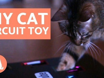 DIY Cat Box Toy - Circuit Toy for Cats Tutorial