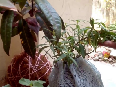 How to create your own hanging KOKEDAMA from waste materials.New easy method in (Hindi and Urdu)