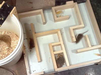 Mouse trap maze experiments