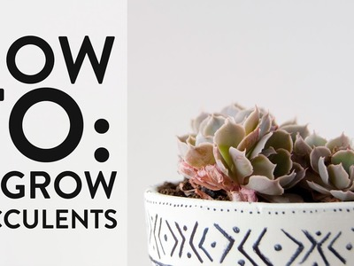 How-To | Regrow Succulents