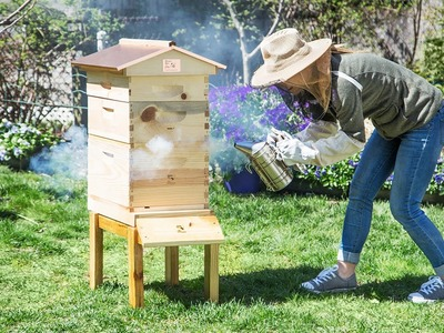 Save the bees! (And harvest your own honey.)
