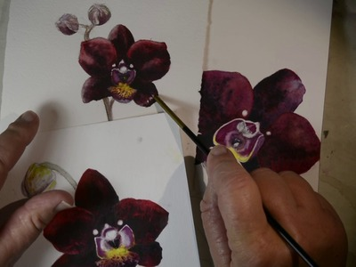 Watercolor Paper Comparison #2 - Paper Makes a Difference When Painting Orchids