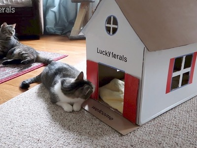 Stella's New DIY Cardboard Cat House