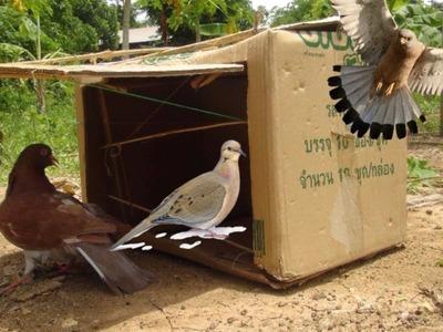 Awesome Quick Bird Trap Using Cardboard - DIY Best Bird Trap That Work 100%