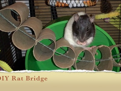 How To Make A DIY Bridge For Your Rat Cage