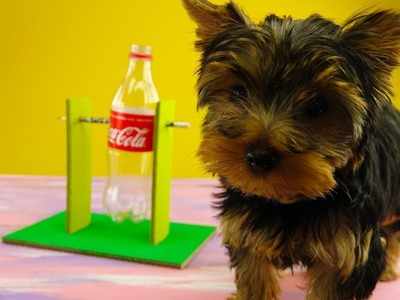 Amazing Dog Game from Coca Cola Bottle | DIY Puppy Game