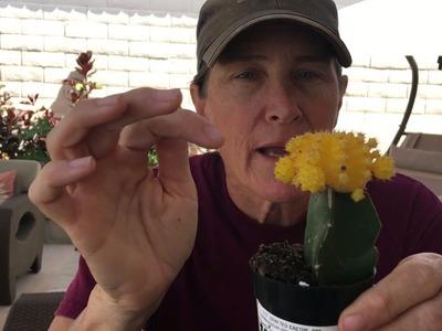 DIY Cactus Pot