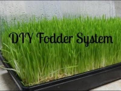 DIY Fodder - How We Grow Fodder For Our Dexter Cattle