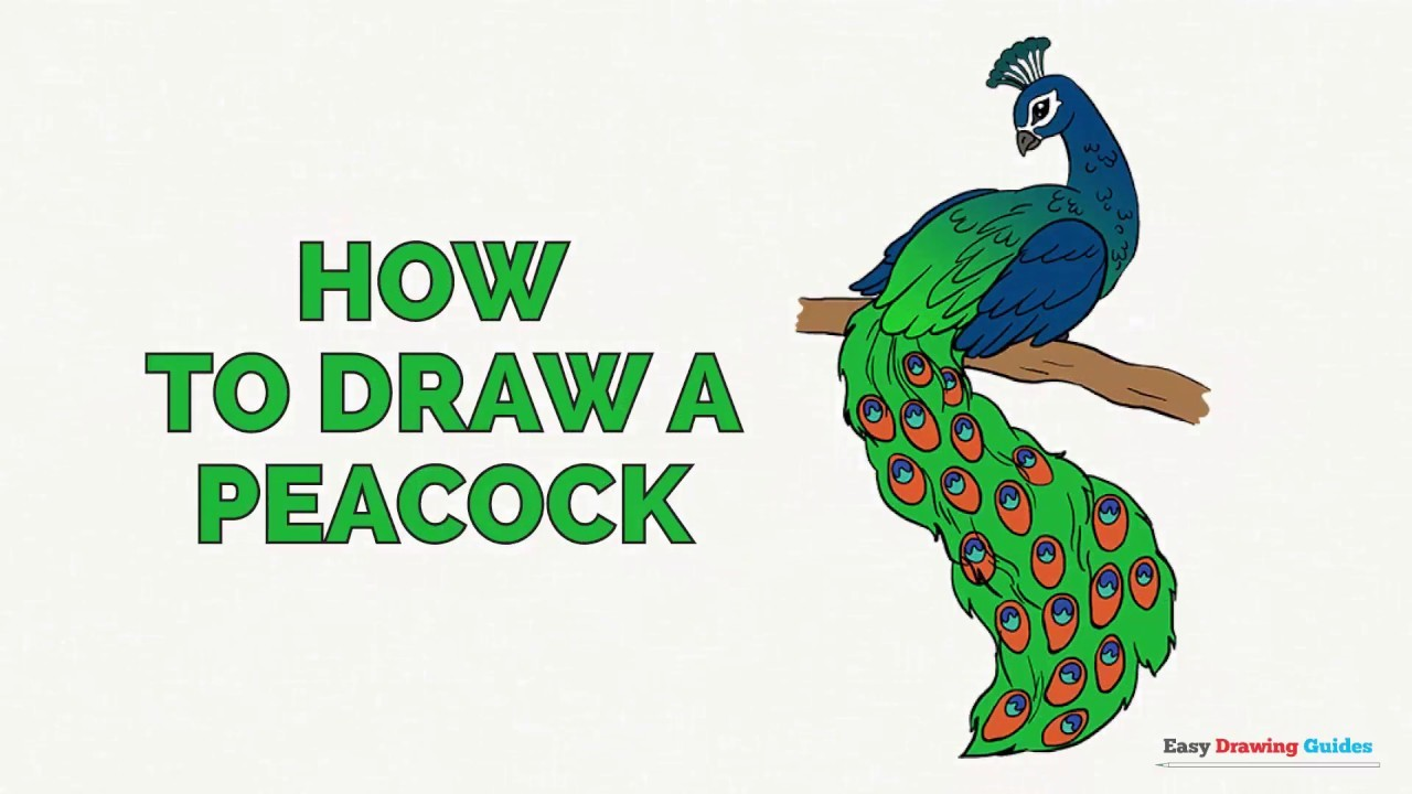 How to Draw a Peacock in a Few Easy Steps: Drawing ...