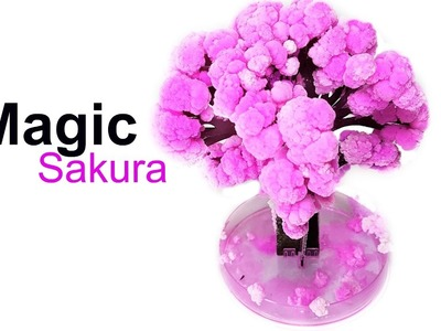 MAGIC Sakura DIY Fun!
