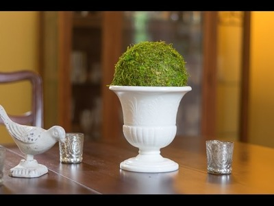 The EASIEST way to DIY a Moss Ball