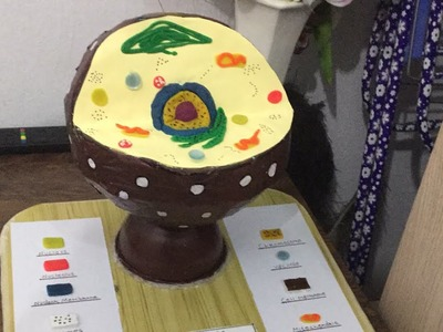 How to make a model of animal cell