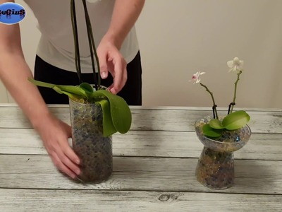 Planting Orchids with Water Beads - DIY !! Amazing !! ✔