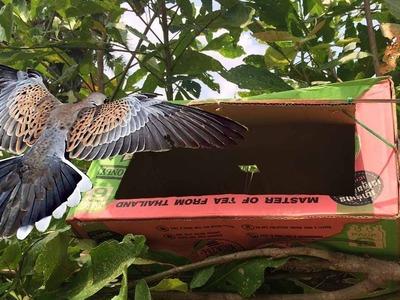 Smart girl make bird trap using box paper | How To Make Bird Trap With Box Paper Work 100%