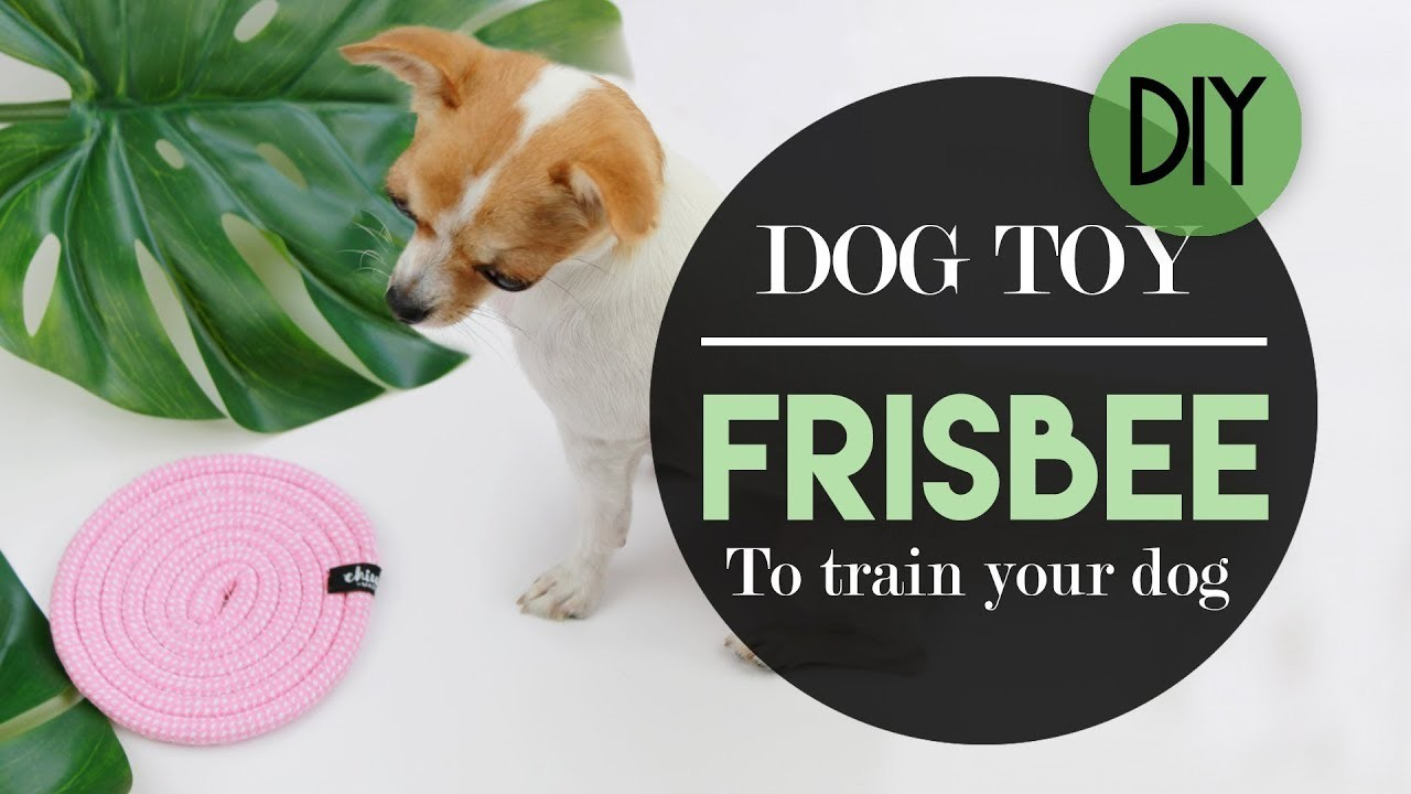DOG EASY HOMEMADE FRISBEE TOY | DIY