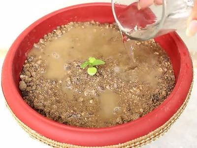 How to make Decorative Planter Pot || DIY Basil (Tulsi) Pot