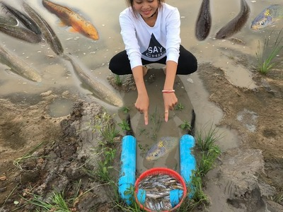 DIY Trap! Farm Girl Make Quick Fish Trap Using Pipe Tap And Basket Bin Trap To Catch A Lot Of Fish