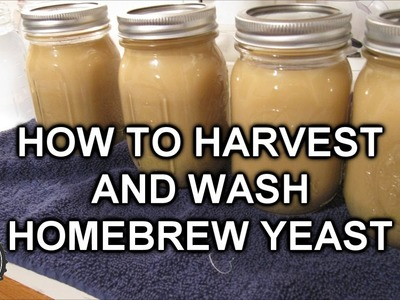 How To Harvest And Wash Homebrew Yeast