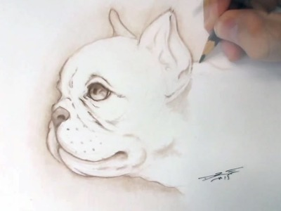 How to draw a puppy - French Bulldog time lapse