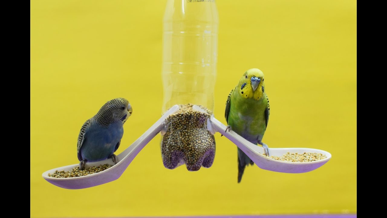 How to make a Bird Feeder at home