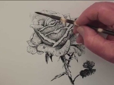 How to draw a rose in pen & ink 4