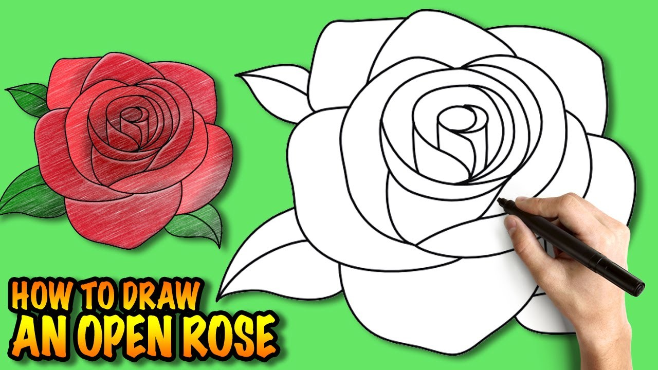 How To Draw An Open Rose Easy Step By Step Drawing Tuturial My