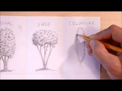 How to draw basic tree shapes