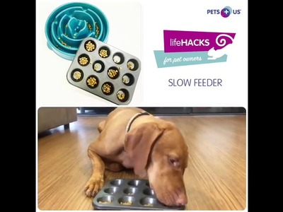 Life Hacks For Pet Owners: DIY Slow Feeder