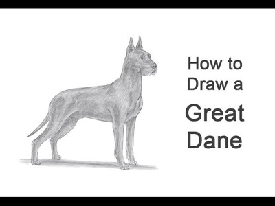 How to Draw a Dog (Great Dane)
