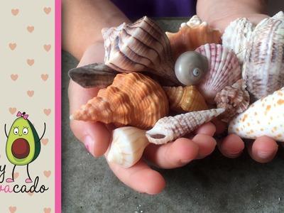 Collecting Seashells & Learning Shell Names at Sanibel Island, FL - Seashell capital of the world!