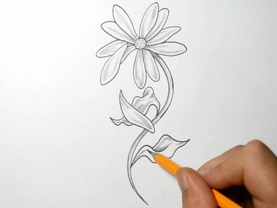 Drawing a Daisy with Falling Petals