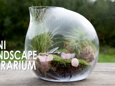 How to make a Mini Landscape Terrarium with air plants and Grass