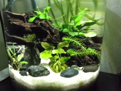 Jar Aquarium.