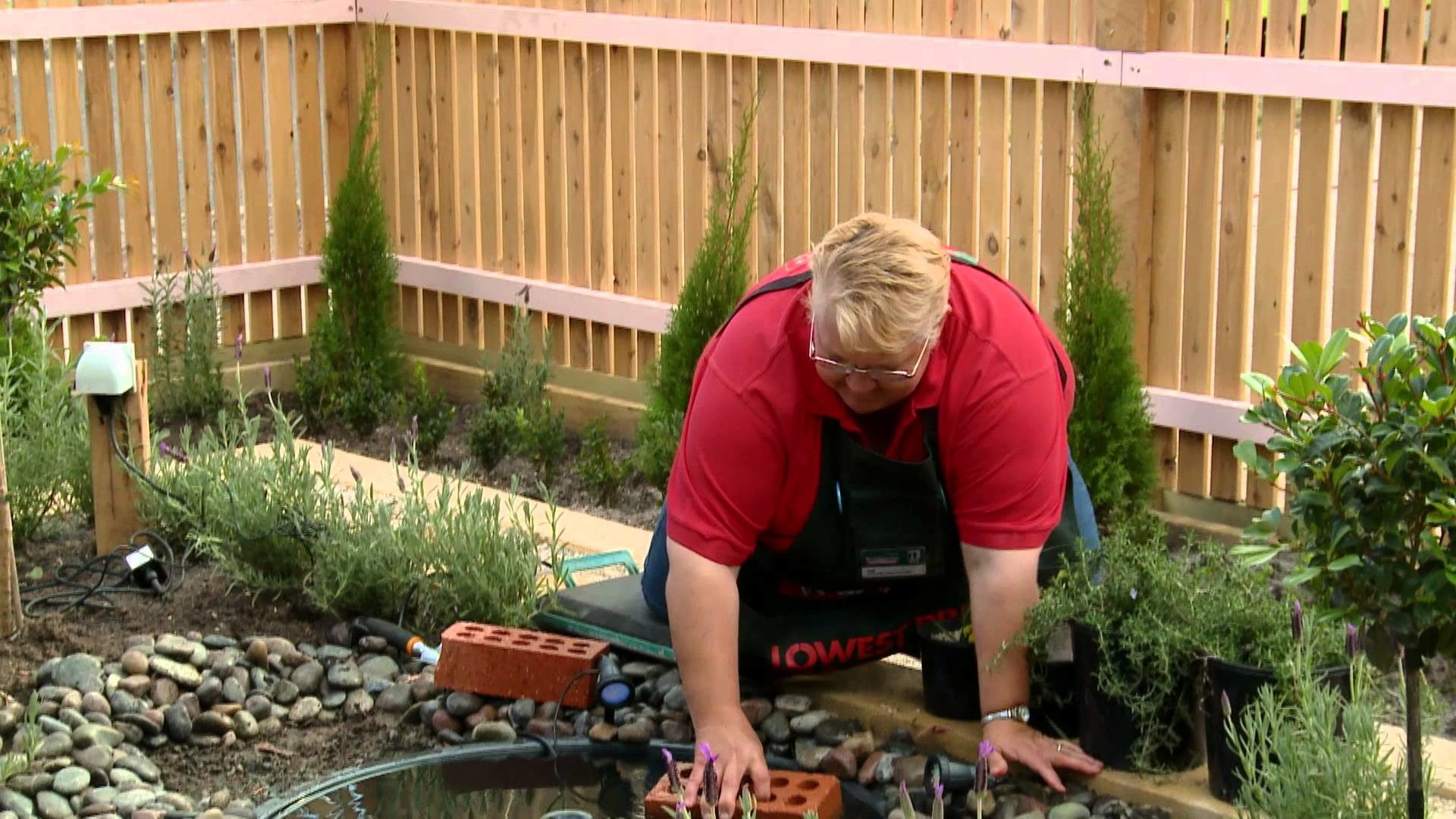How To Create A Water Garden - DIY At Bunnings