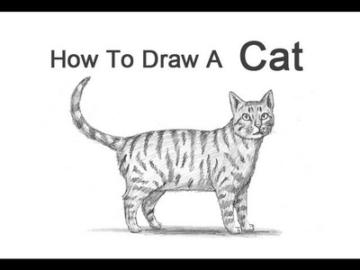 How to Draw a Cat (Tabby)