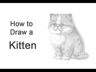 How to Draw a Kitten (Persian)